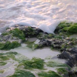 foamy water & algae