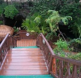 stairway down below the jungle